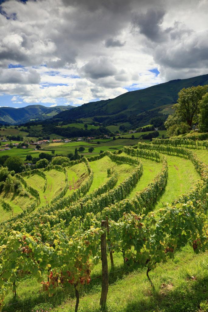Vineyards-Irouleguy